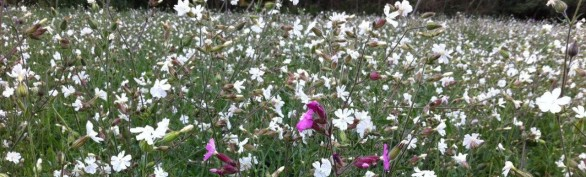 A wonderful mix of native woodland meadow flowers at Respects GB Scrooby / Bawtry Memorial Park
