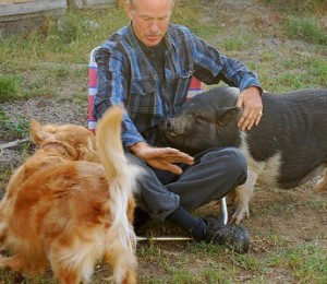 Man playing with pig and dog