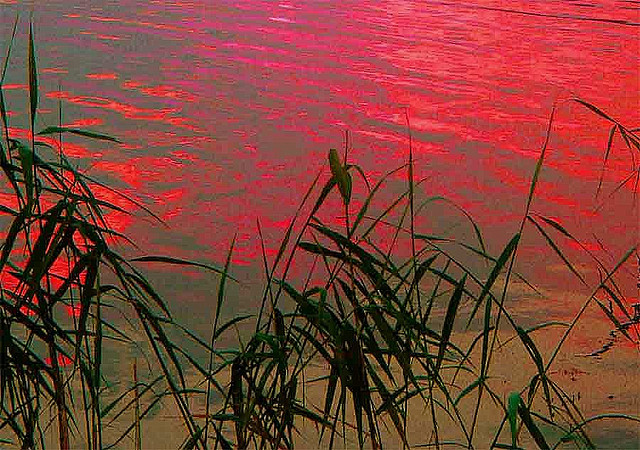 Reed and Red by Per Ola Wiberg ~ powi on flickr.com