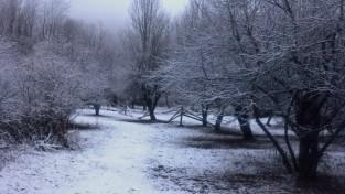Pet Memorial Acres - winter calm
