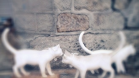 Linda Brenner, Ghost Cats. Installation from 2005-2011. Eastern State Penitentiary.