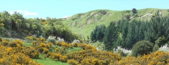 Michael Coghlan, Rural Wonderland (detail). 2011. flickr url: http://tinyurl.com/neq2j67.